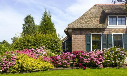 As melhores plantas para ter no jardim de casa