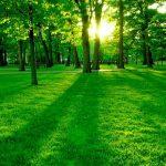 7 benefícios de morar junto a natureza para a sua saúde física e mental