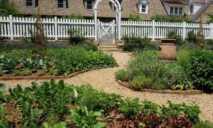 Como manter uma horta no pátio de casa