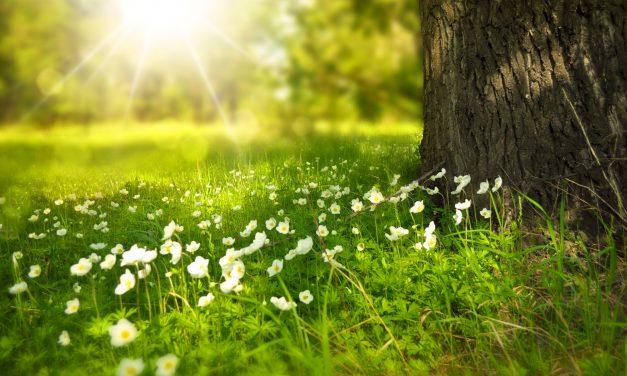 Por que o Verdes Campos é o melhor empreendimento para quem gosta de viver em contato com a natureza