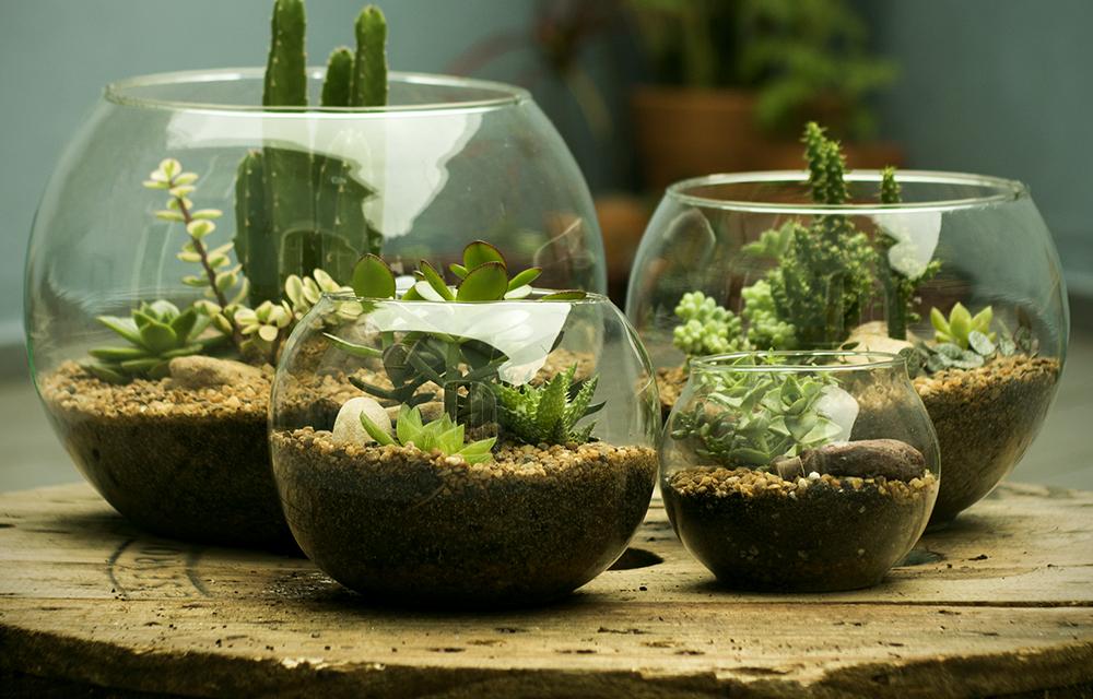 Como fazer um terrário para suas plantas