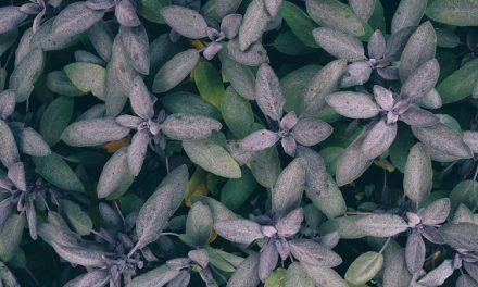 5 cuidados especiais para manter suas plantas bonitas no inverno