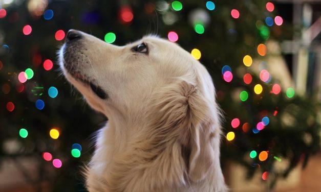 Tradições Natalinas: como animar sua ceia de Natal