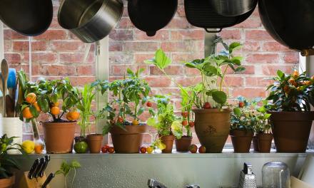 7 plantas que purificam o ar do ambiente